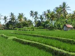 Retour de 6 mois en Asie du sud est. Coups de coeur - LoMat