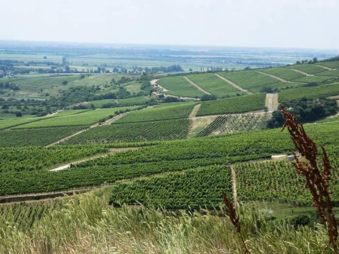 TOKAJ, l'un des meilleurs vins du monde à 2h30 de Budapest - titimathi